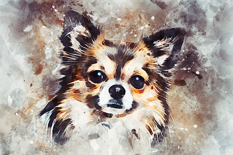 Chihuahua Picture Painting