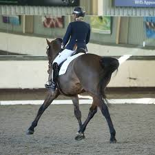Dressage Riders and Trainers