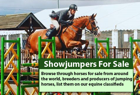 Showjumpers For Sale